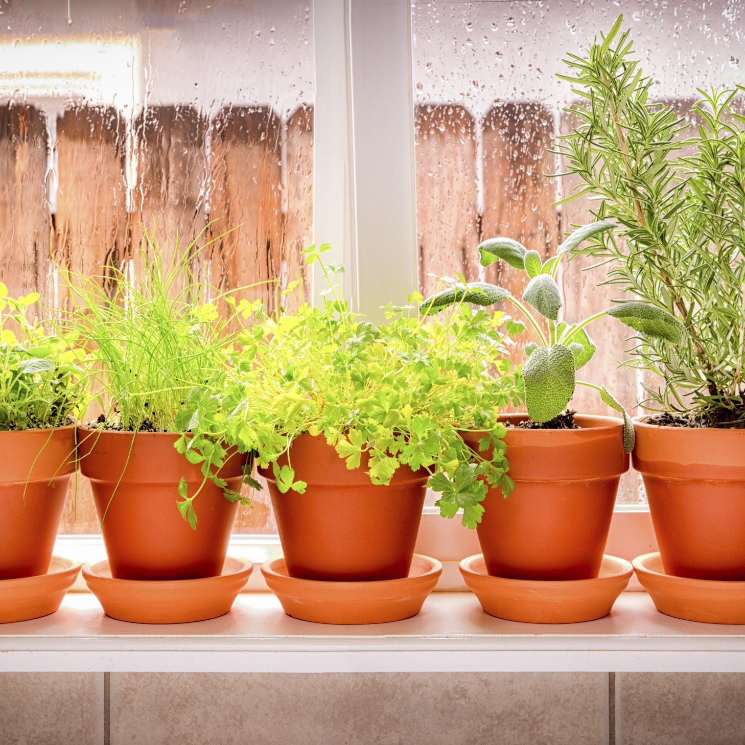 The top 10 herbs to grow indoors this spring partnership - Best herbs to grow indoors ...